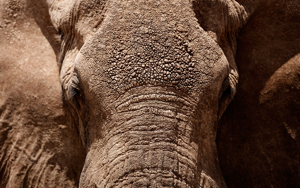 """""""Elephanten Makro"""""""