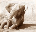 Elephantenkuh2...