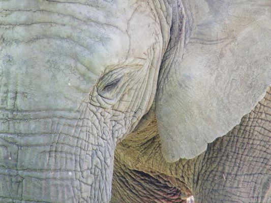 Elephantesque !
