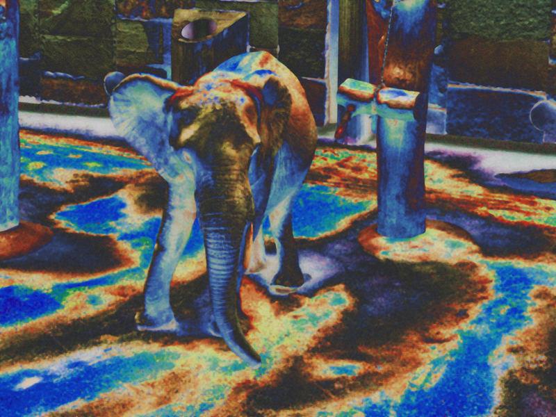 Elephantomorphosis