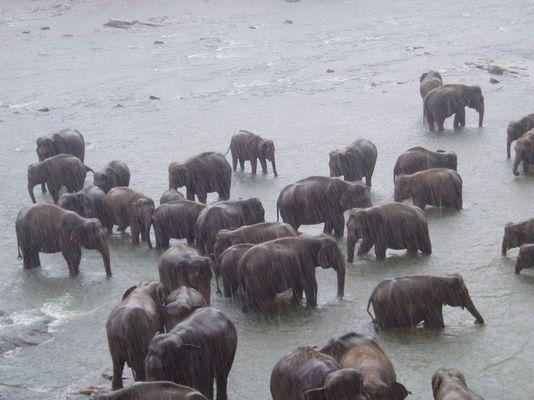elephants in rain.