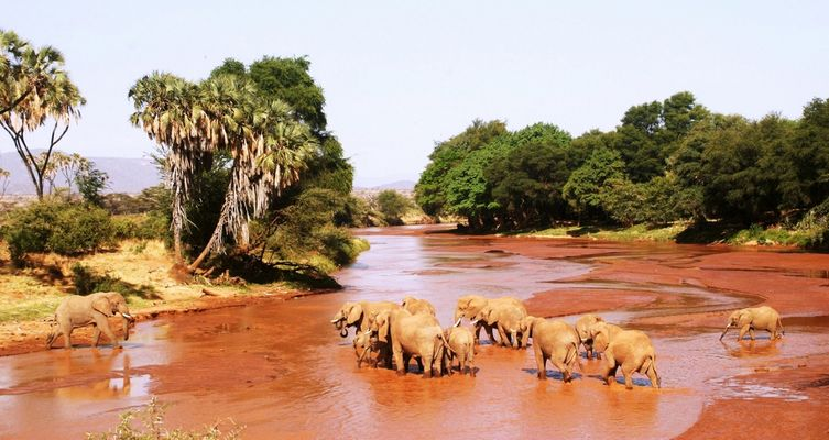 Eléphants - Samburu / Kenya - Traversée de rivière