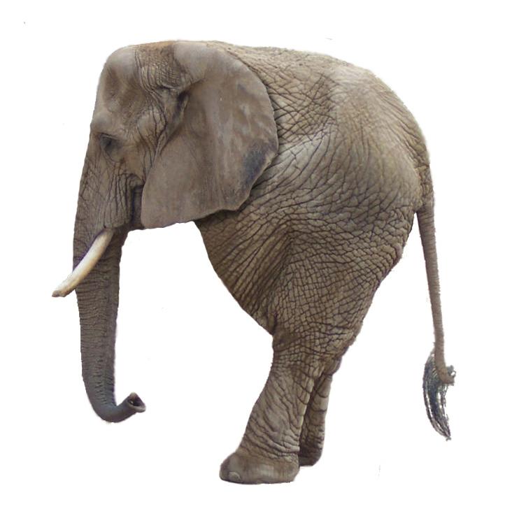 Elephantus bipedus