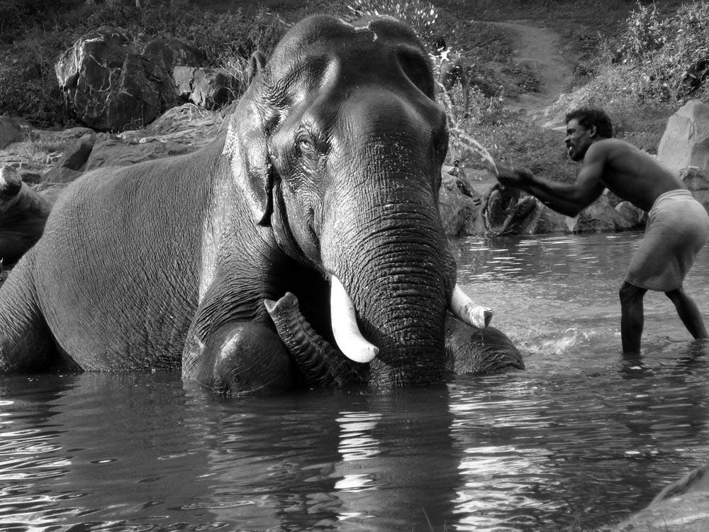 Elephantwashing