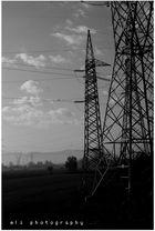 elettronic tree __