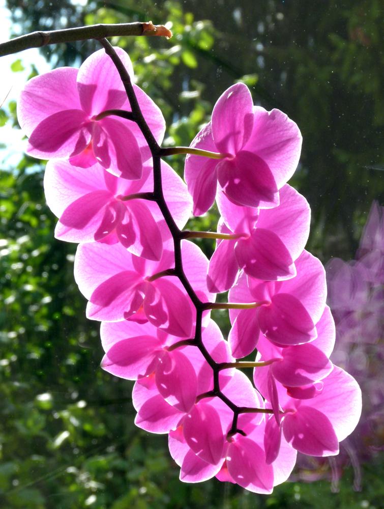 ...elf Blüten müsst Ihr sein...4...