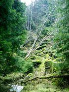 Elfenbeinbaum