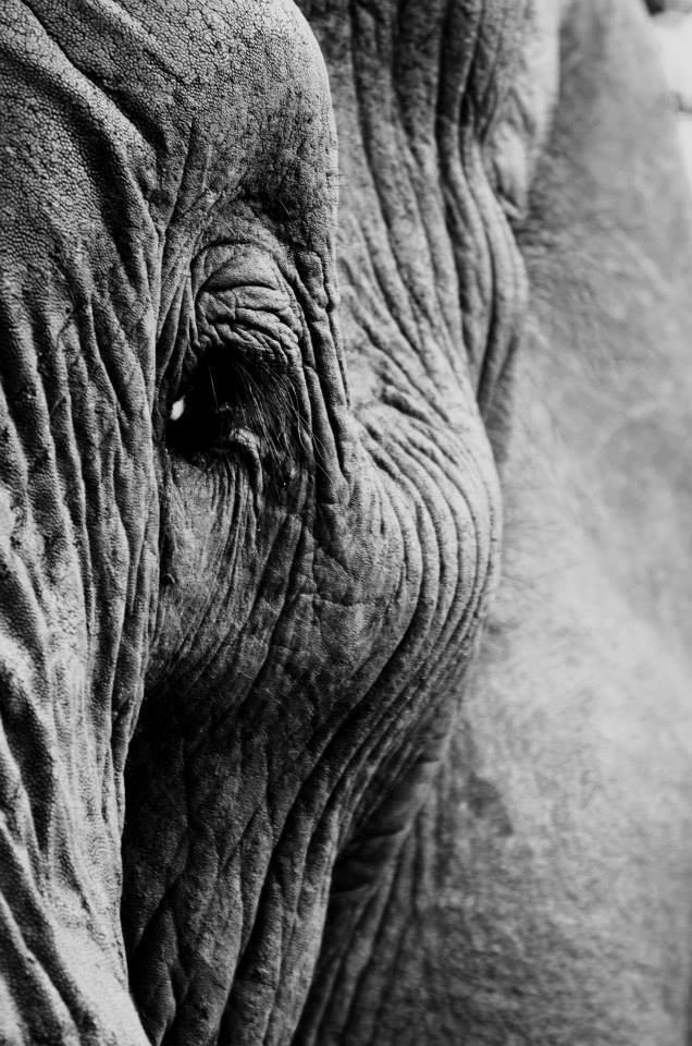 Eli Serengeti closeup
