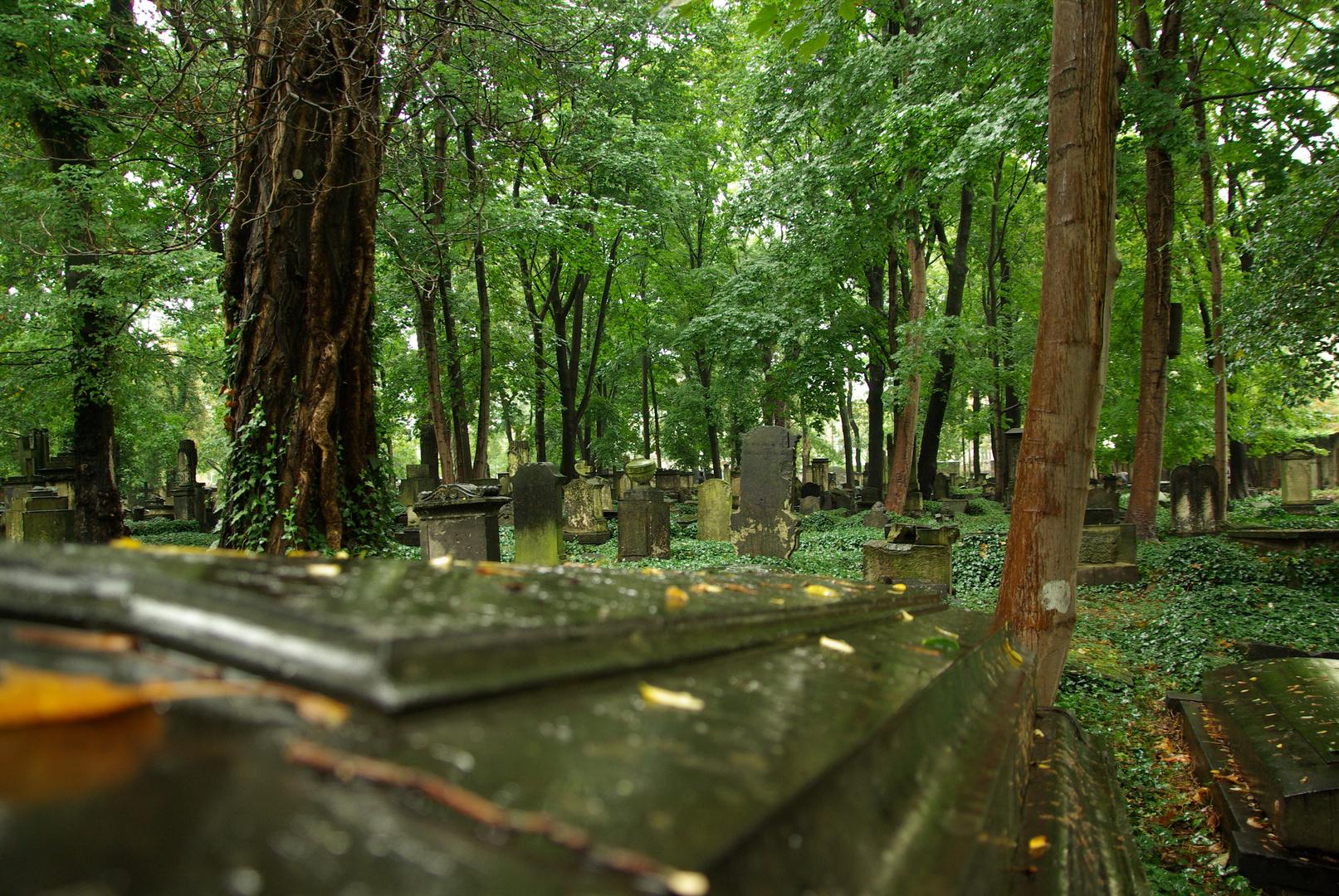 Eliasfriedhof_6