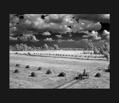 Elio Ciol - Fienagione dei magredi, Domanins 1963