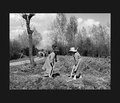 Elio Ciol - Nei campi, Orcenico inferiore 1959