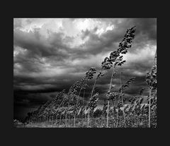 Elio Ciol - Sinfonia del vento, Chions 1965