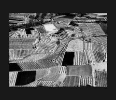 Elio Ciol -Viti come disegni m, Ramandolo 1996