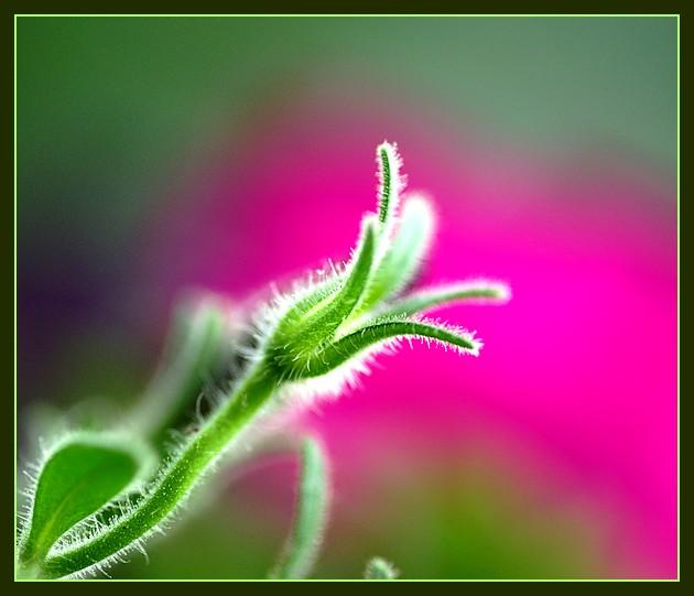 Elle a perdu sa fleur mais offre son coeur à la nature