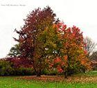 Ellerhop Arboretum Ellerhop