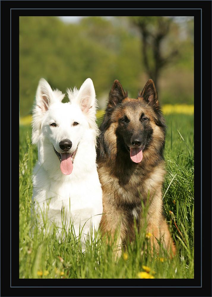 ELROY & WAYNE-MOON