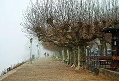 Eltville - Rheinuferpromenade an einem kalten Januartag