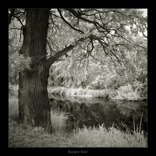 Elven woods