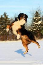 Elvis im Schnee