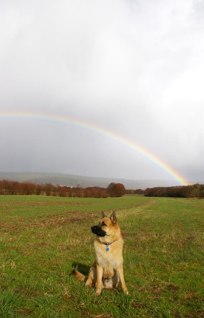 Elvis unter dem Regenbogen