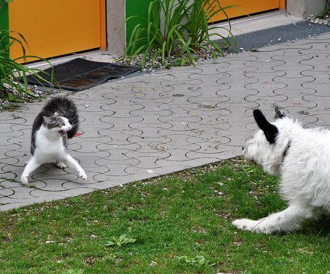 EM Katze : Hund 2. Runde
