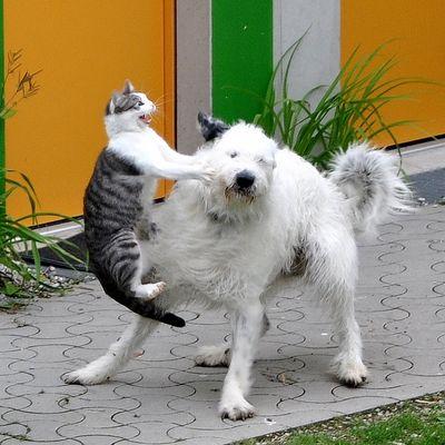 EM Katze : Hund