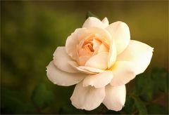 """Emanuel""  ~  September-Rose...."