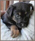 Emil 4 Wochen alt