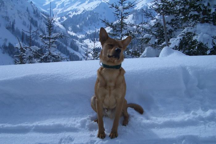 Emil beim Sonnenbad in den Bergen