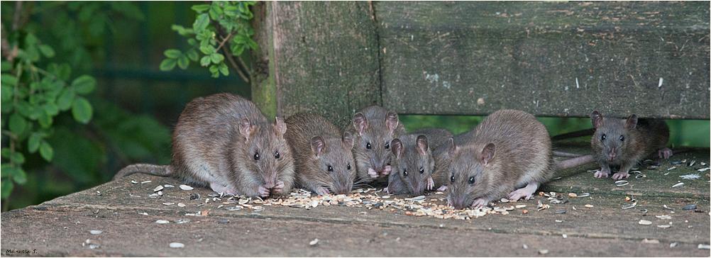 Emil's family