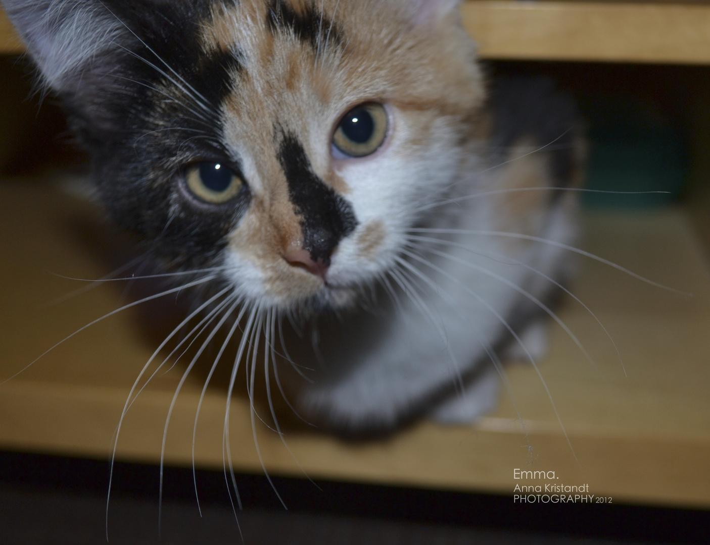 Emma, das kleine Kätzchen
