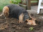 Emma gräbt