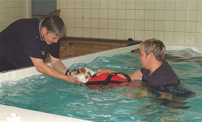 Emma im Hundeschwimmbad 2