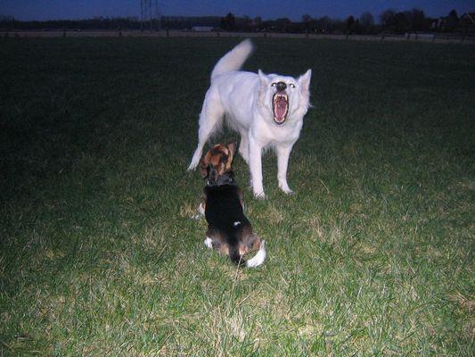 Emma und der böse Wolf