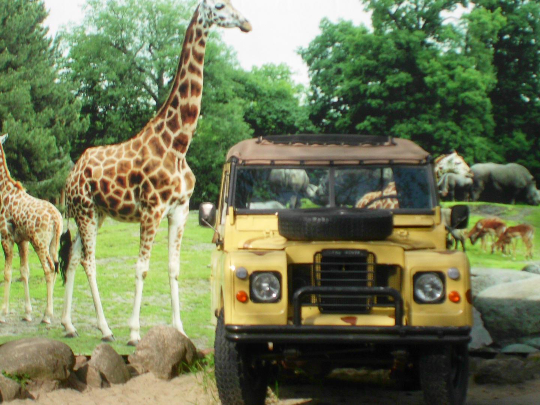 Emmener Zoo Land Rover