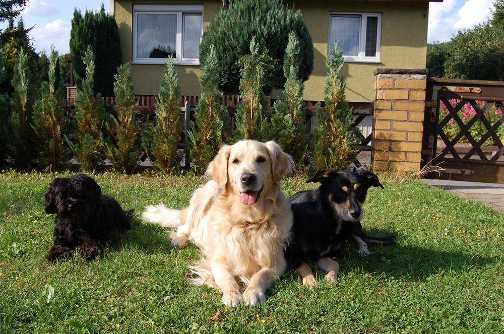 Emmy, Max und Sissi