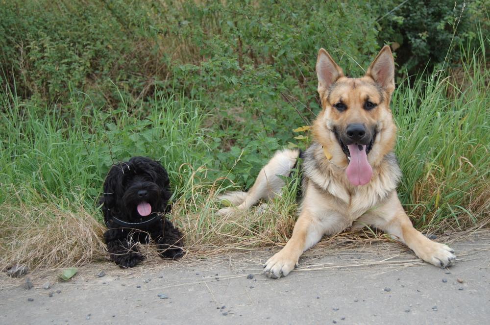 Emmy und Daik