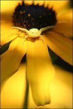 Empfang am gelben Teppich