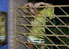 Emprisonnée