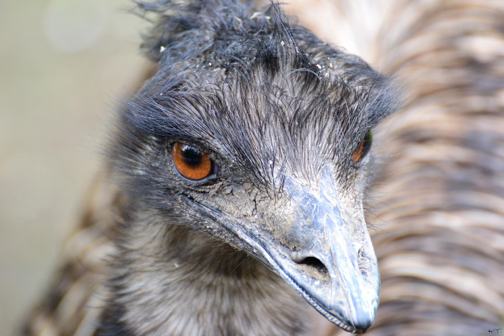 Emu (2)