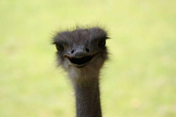 Emu aus Krefeld