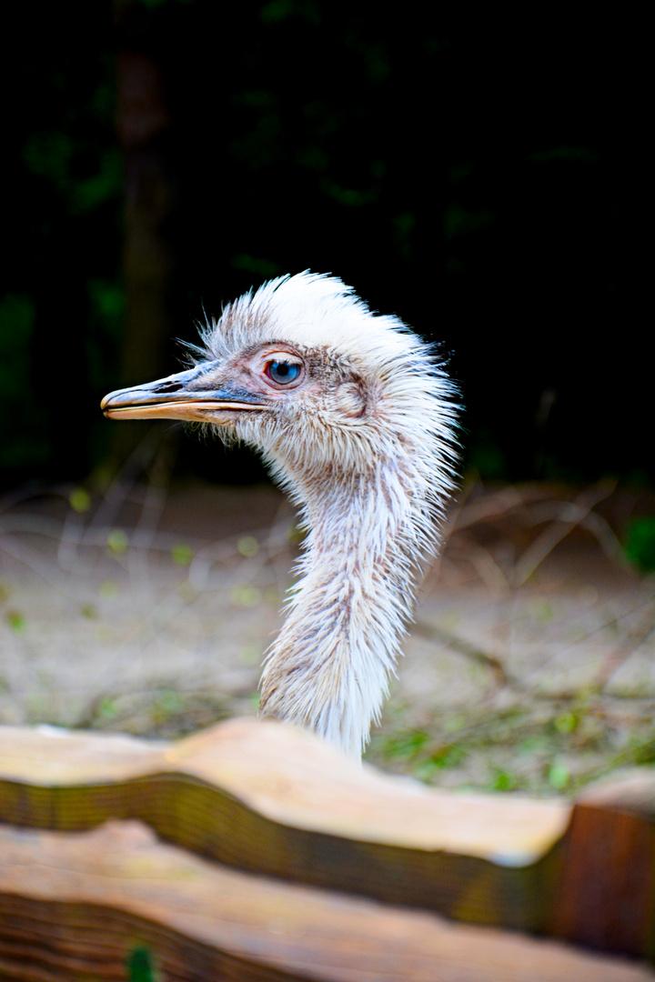 Emu-Baby