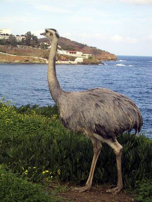 EMU I