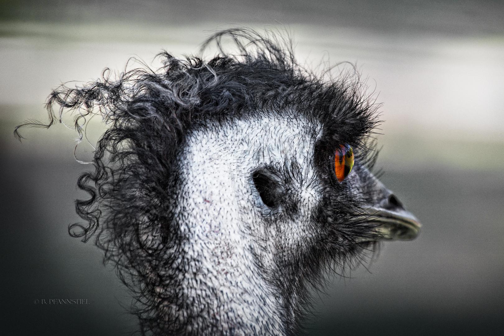 Emu-Punk II