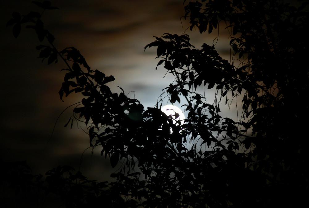 En attendant la nuit