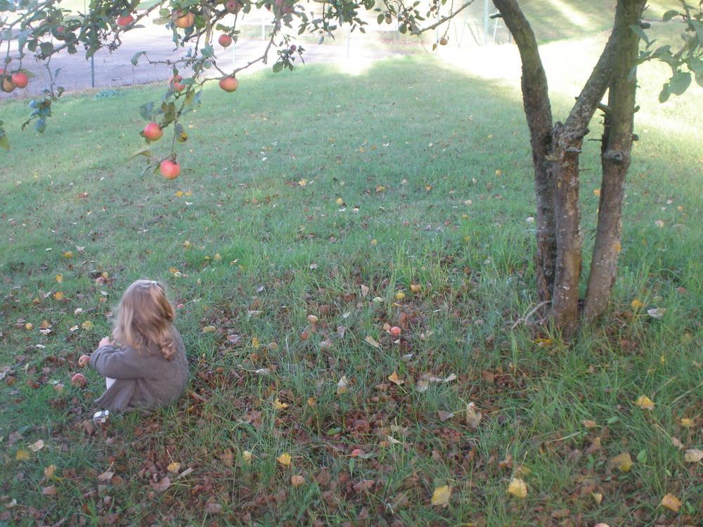 En attendant la pomme