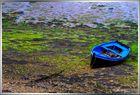 En Bretagne... Algues vertes!!!!!!