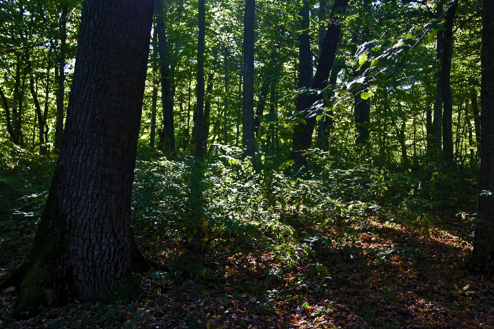 En cualquier bosque del mundo