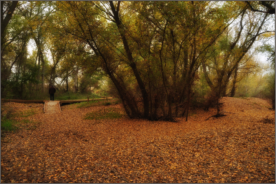 En el bosque de la memoria