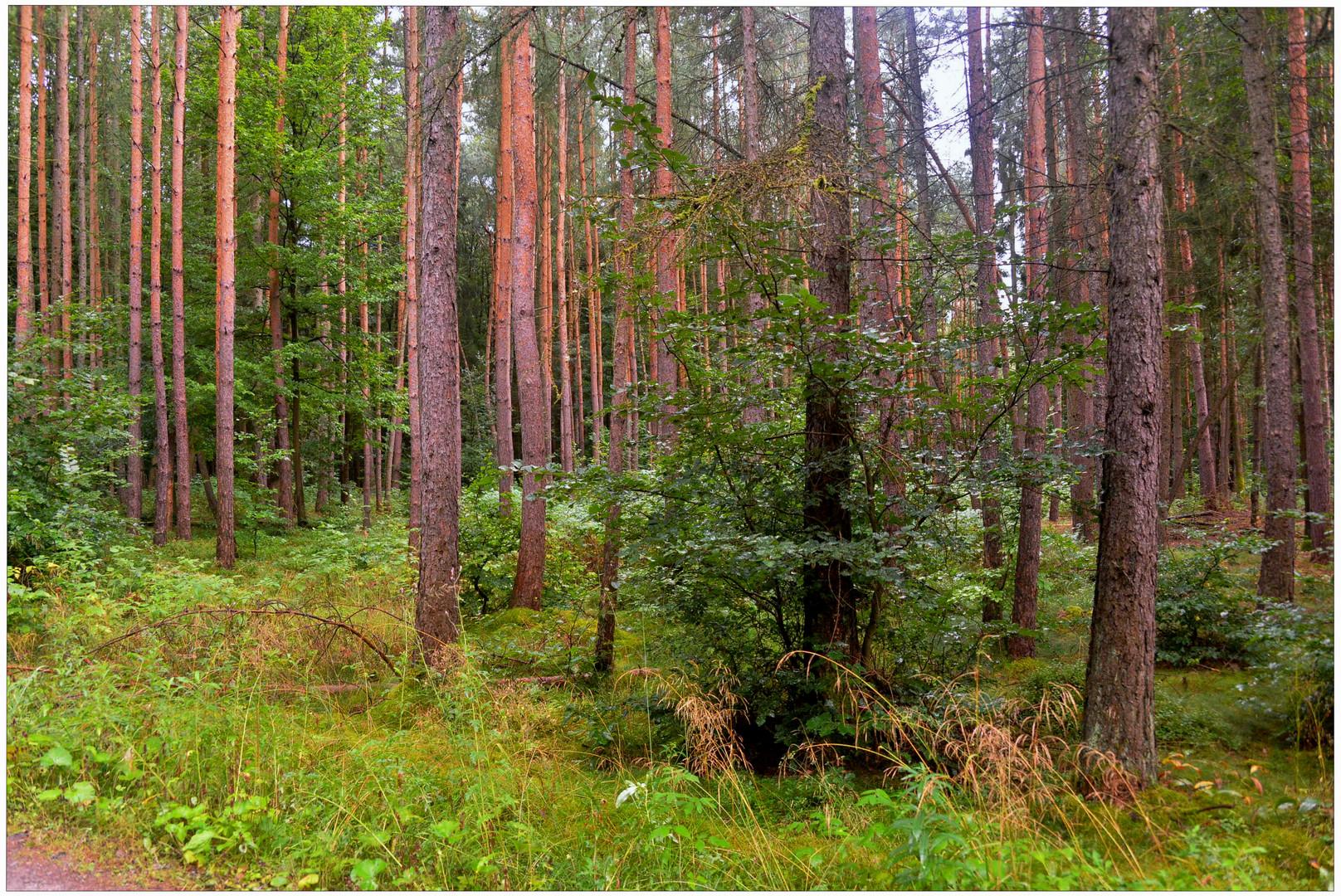en el bosque (im Wald)